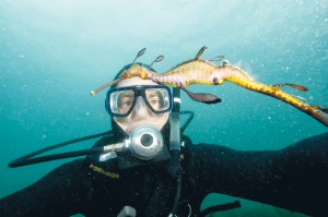 Saving weedy:A new report reveals more of the life lived in Western Port by the weedy seadragon, Victoria's official marine faunal emblem. The research will aid habitat management and preservation efforts.
