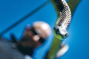 barry goldsmith snakes 08-11-2012 by yanni 03