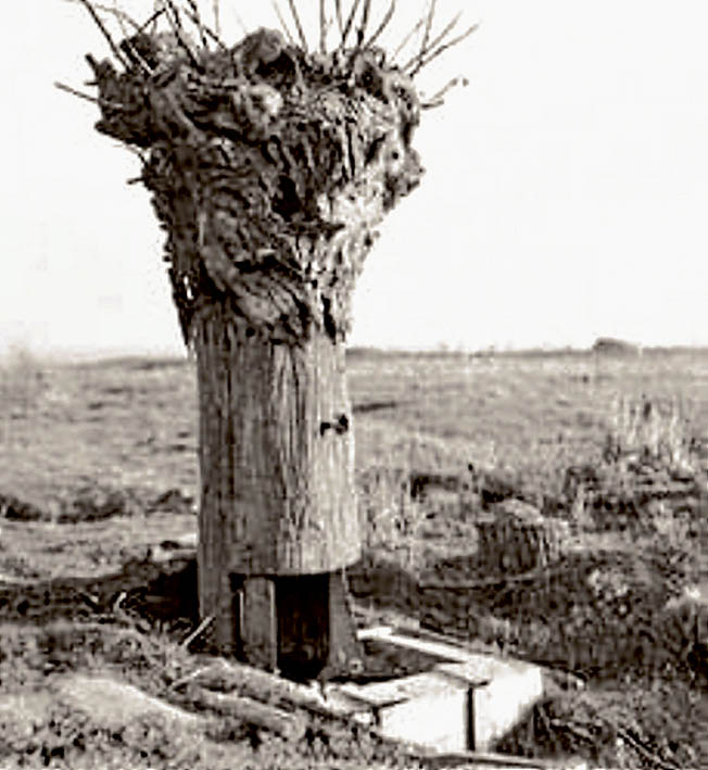 Above: A German lookout post at Messines.