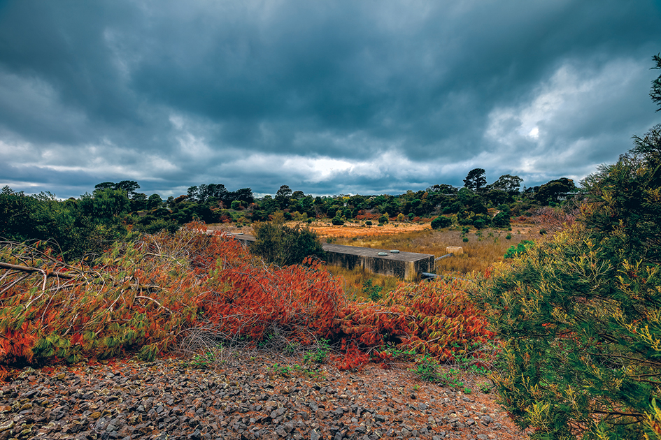 Decision time: South East Water's decommissioned reservoir in Mt Eliza has become a haven for flora and fauna but a state planning panel is about to decide its fate. Picture: Yanni