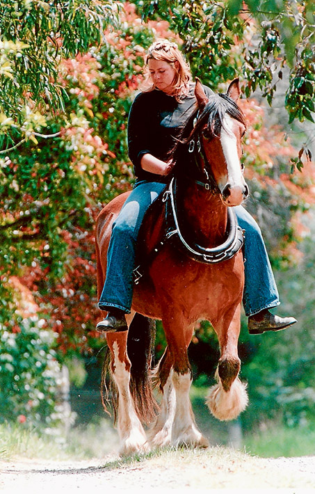 Equine economics: Tyabb horse lover Geraldine Chapman on Cub, a Clydesdale/standard bred.