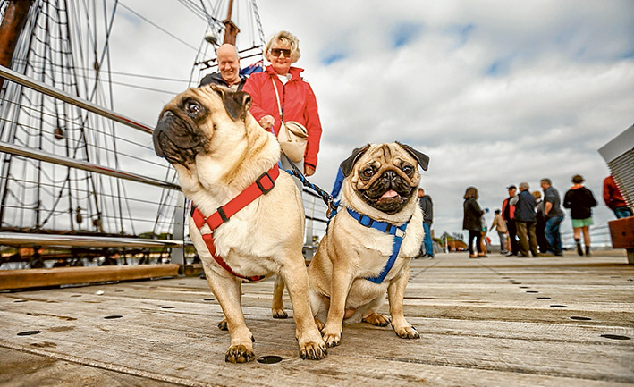 Also trying out the new pier are Neil and Linda Sanddington, above, with pugs Ava and Theo. Pictures: Yanni