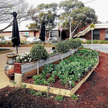 The vegie garden before it was ripped out by council workers, above, and the vegies thrown into a hopper.