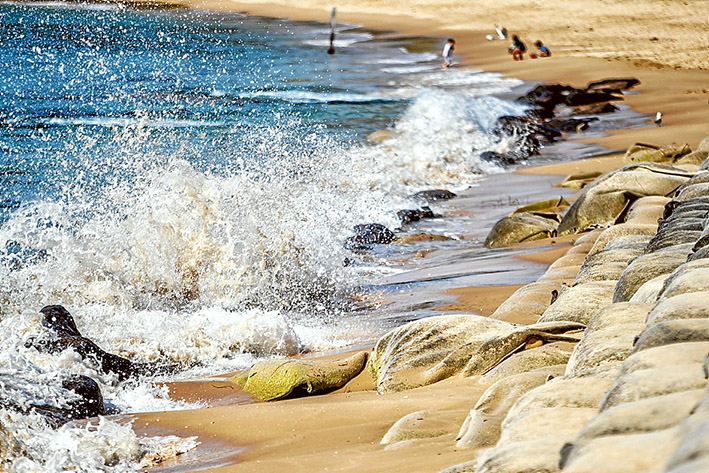 Pounded: The $3 million sandbag wall built to protect Portsea's eroding front beach in 2010 continues to be damaged by waves that first appeared in 2009. The state government has a new report into the phenomenon and faces a number of expensive options. Picture: Yanni