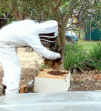 Moving house: Simon Mulvany removes a swarm of bees from Beleura Hill Preschool.