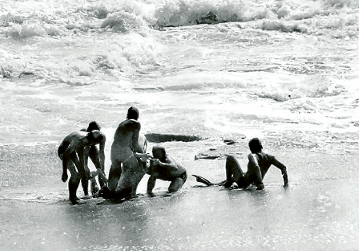 Rescuers at the ready: Gunnamatta lifesavers rescued two fathers caught in wild seas at St Andrews on a hot summer's day in 1975. There were no mobile phones to call for help and the lifesavers were based in a small tin shed. Fifty years later the club is about to celebrate its 50th year of continually being available to rescue swimmers caught in the seas that were once thought too dangerous to enter. Rescue pictures: Keith Platt