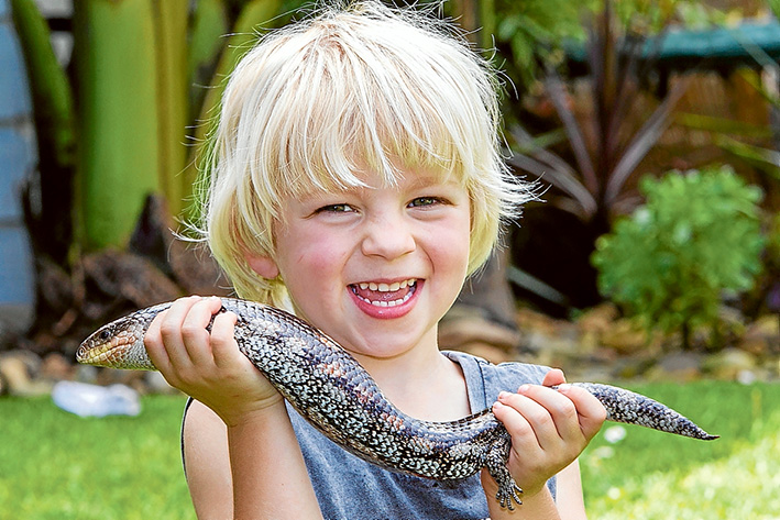 A FAMILY in Balnarring has been reunited with long-lost pet Aussie the blue tongue lizard after he went missing for 18 months. Picture: Gary Sissons