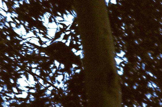 possum silhouette