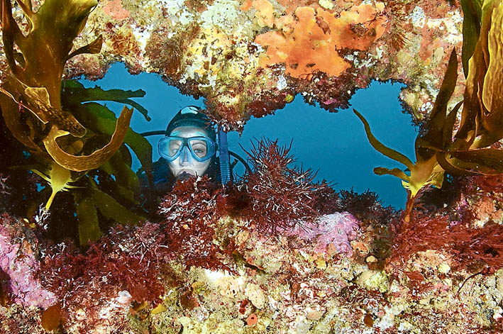 The other world: Filmmaker, author and marine educator Sheree Marris, above, takes a dive in Port Phillip, below, home to a variety of life forms, including the southern blue devil, right. Pictures: Jarrod Boord and Sheree Marris