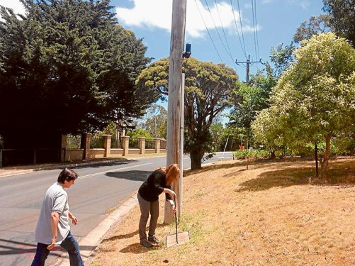 Under cover: Wildlife carers, above, remove a telecommunications pit cover while looking for families of sugar gliders which have moved in because of a lack of available tree hollows in Mt Eliza.