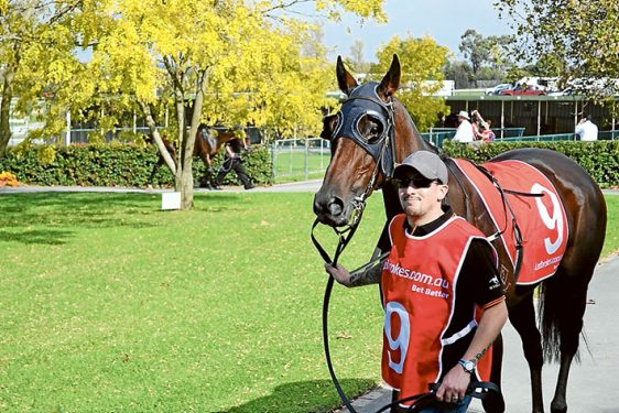Out she comes: Strapper Jason Leatherby, leads Beleura Belle to the track. Pictures: supplied