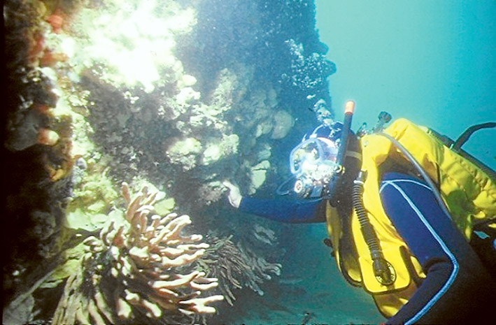 Exploring the wreck. South Channel, Port Phillip.
