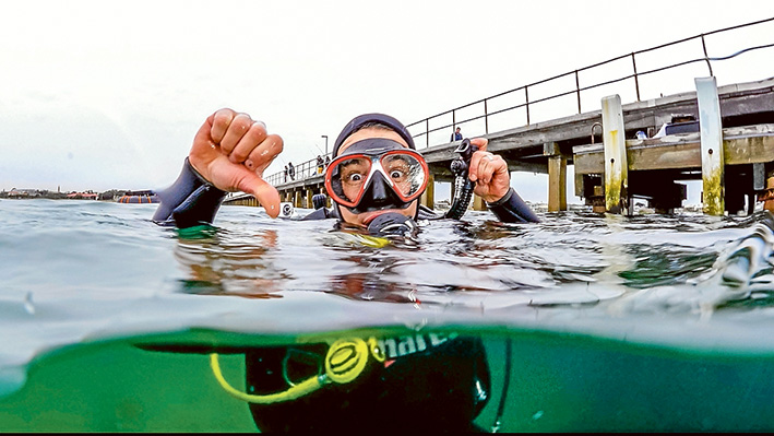 In the swim: Diver Anthony Morton takes the plunge to help relocate Blairgowrie marine life.