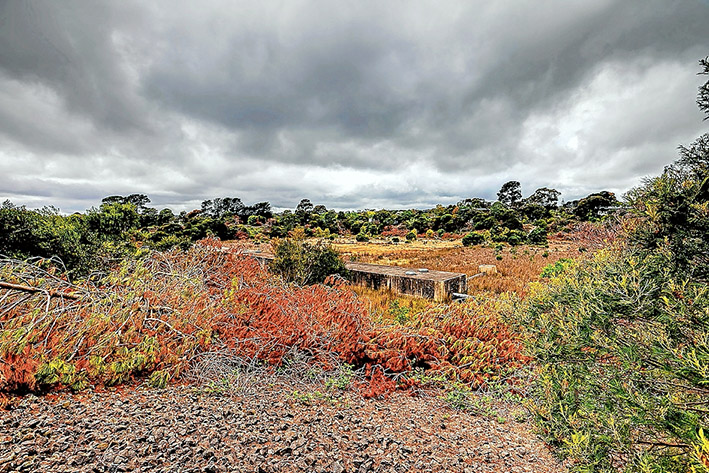Nature at risk: The former reservoir could be sold for housing. Picture: Yanni