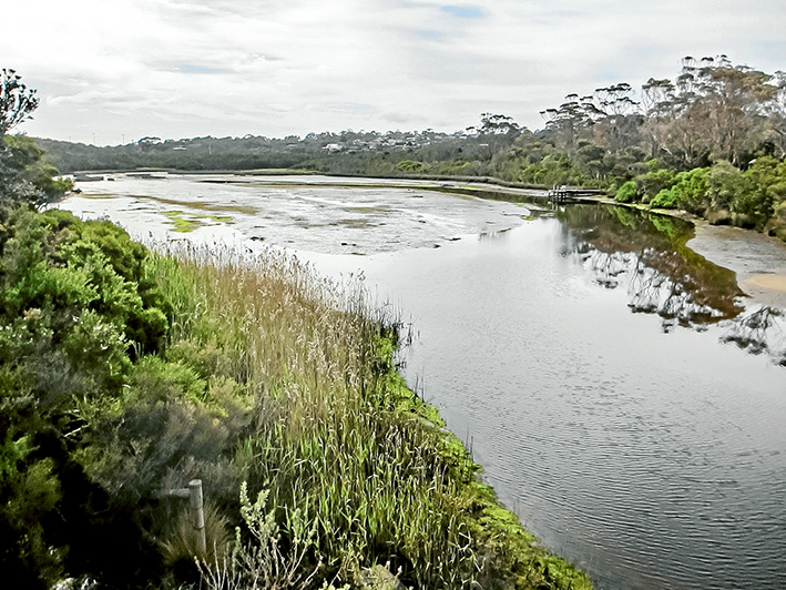 Silt is clogging up Balcombe Creek, impeding flows and destroying seagrass beds that provide food for fish and birds. Picture: Keith Platt